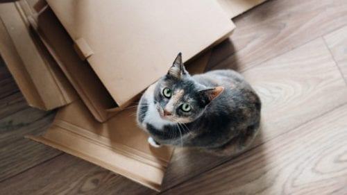 déménager-carton-chat